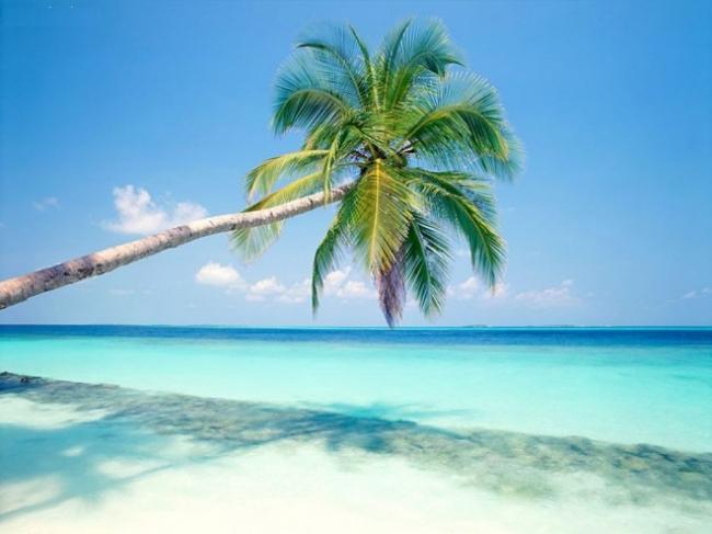 Punta Cana en Verano ☼ Avance 2020
